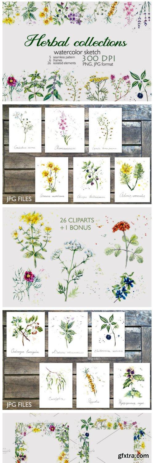Collection Herb 4299719