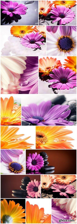 Fiori in acqua - Gerbera - Set of 17xUHQ JPEG Professional Stock Images