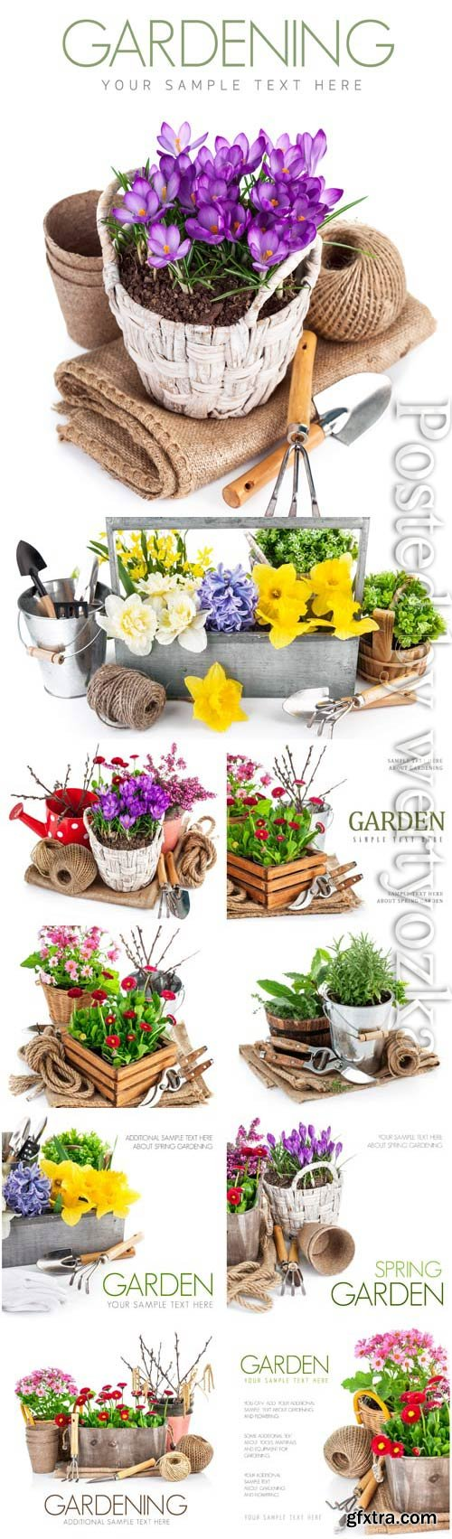 Gardening flowers and plants stock photo