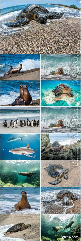Sharks, turtles, penguins, sea inhabitants stock photo