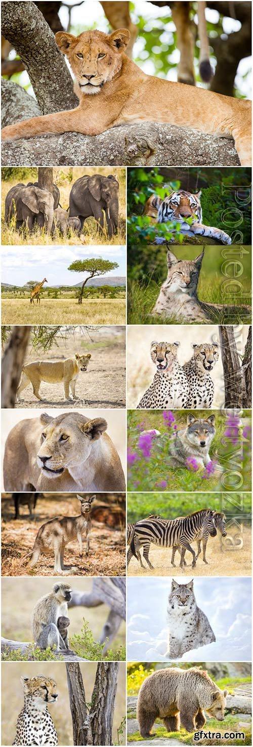 Lion, leopard, bear and various predatory animals stock photo