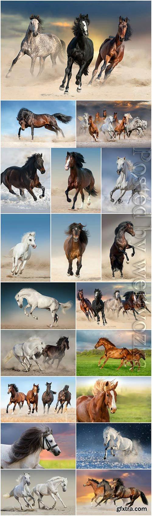 Purebred horses in nature stock photo