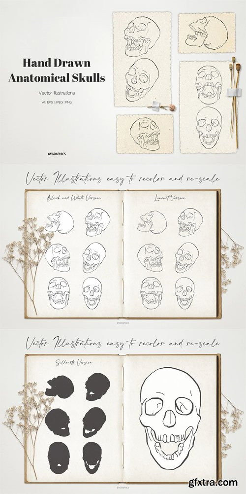 Anatomical Skulls - Hand Drawn Vector Illustrations