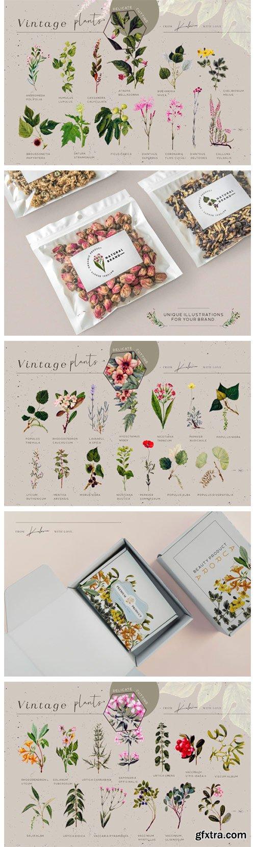 Green Garden - Vintage Botanical Kit 14214371