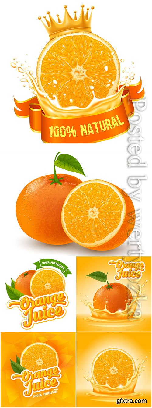 Orange and orange juice in vector
