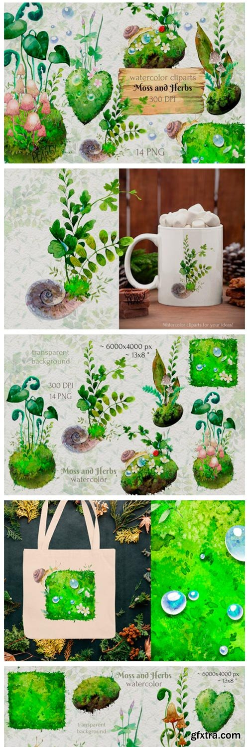 Watercolor Cliparts of Forest Moss, Herb 14972107
