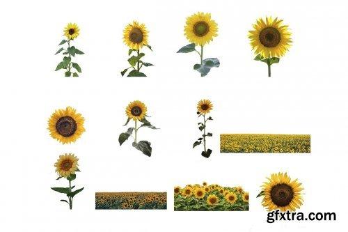 CreativeMarket - Sunflower Photoshop Overlays, PNGs 5264990