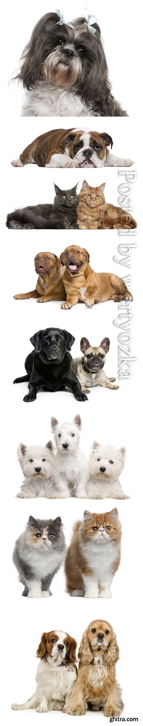 Purebred cats and dogs