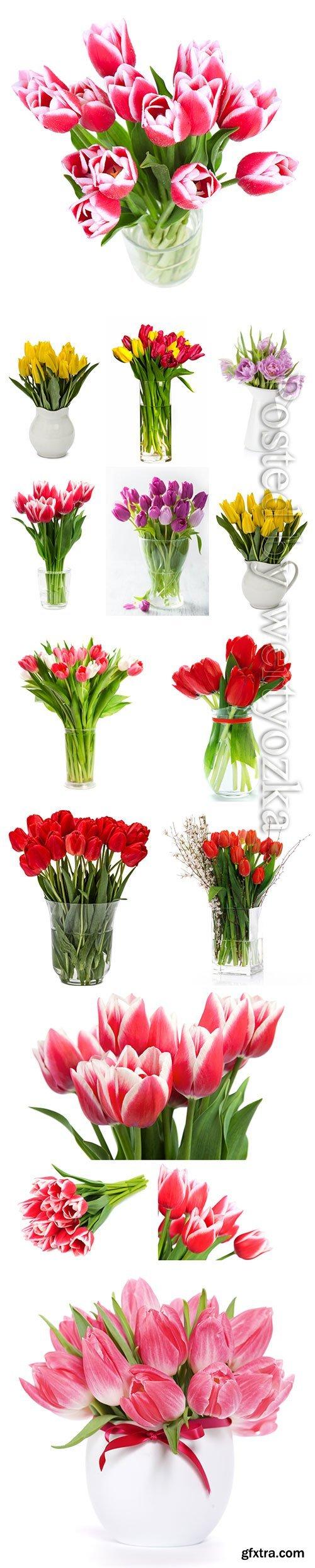 Beautiful tulips in vases stock photo