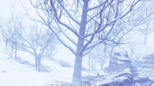 Videohive - Winter Deciduous Forest on a Foggy Morning - 33823711 - 33823711