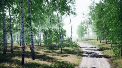 Videohive - Birch Forest in Sunlight in the Morning - 33824350 - 33824350