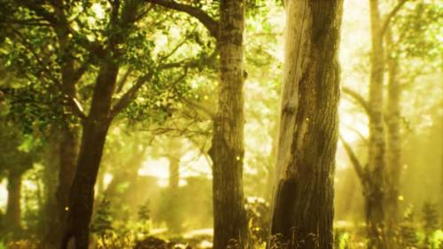 Videohive - Rays of Sunlight in a Misty Forest in Autumn - 33829716 - 33829716