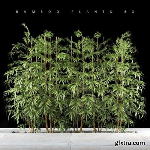 Bamboo plant 7