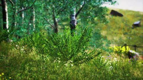 Videohive - Grass Field and Forest Trees - 33829749 - 33829749