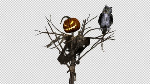 Videohive - Pumpkin Scarecrow and Horned Owl - Transparent Loop - 33846030 - 33846030