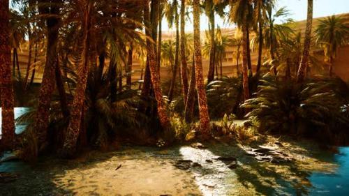 Videohive - Palm Trees in Sahara Desert - 33858339 - 33858339
