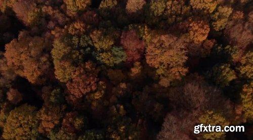 Autumn Season Trees Canopy 911855
