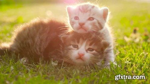 Kittens On Grass 211892