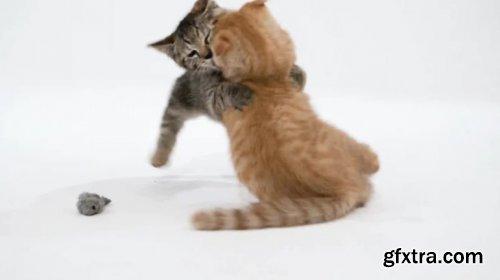 Kittens Playing 811868