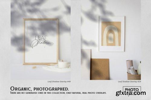 CreativeMarket - Leaf Shadow Overlays 6341914