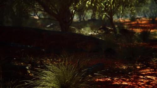 Videohive - Red Sand Bush with Trees - 34136964 - 34136964