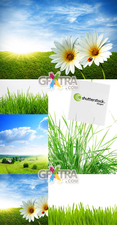 Shutterstock Green Grass HQ
