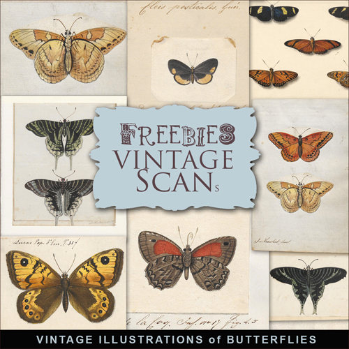 Scrap-kit - Vintage Illustrations Of Butterflies