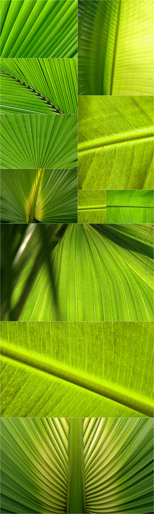 Palm Leaf Backgrounds