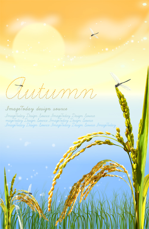 PSD Source - Golden Autumn Grain Rice