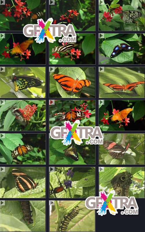 Time Image Volume 21: Butterfly World