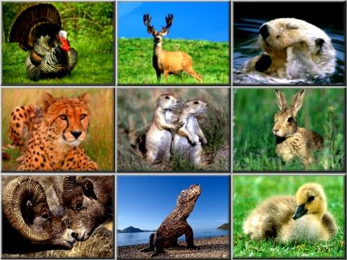 wild animal wallpaper. 159 Wild Animals Wallpapers