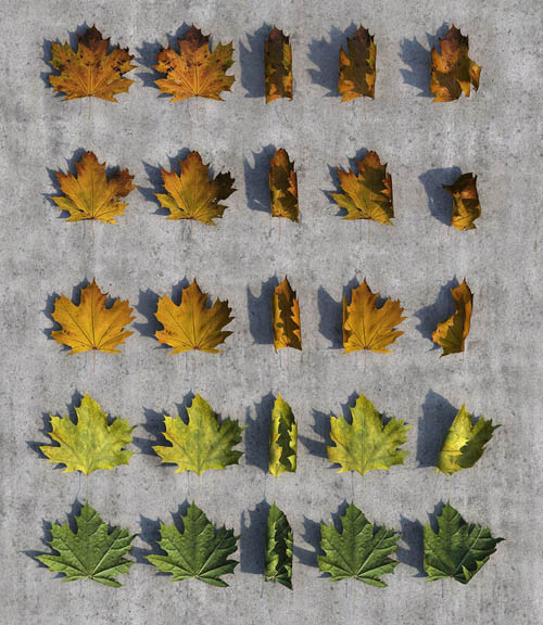 Autumn Leaves Pack 3D Studio Max 2012