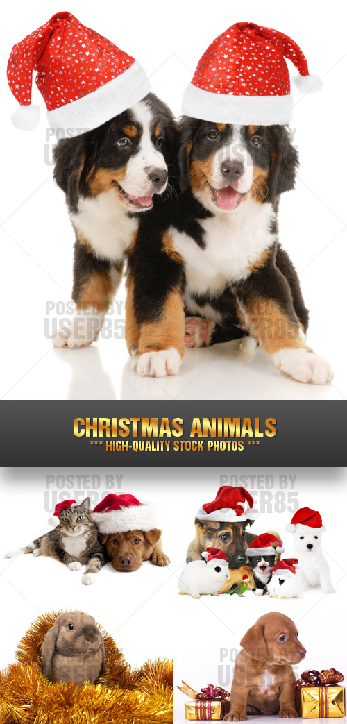 Stock Photo - Christmas Animals