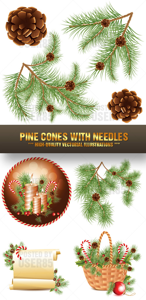 Stock Vector - Pine Cones with Needles