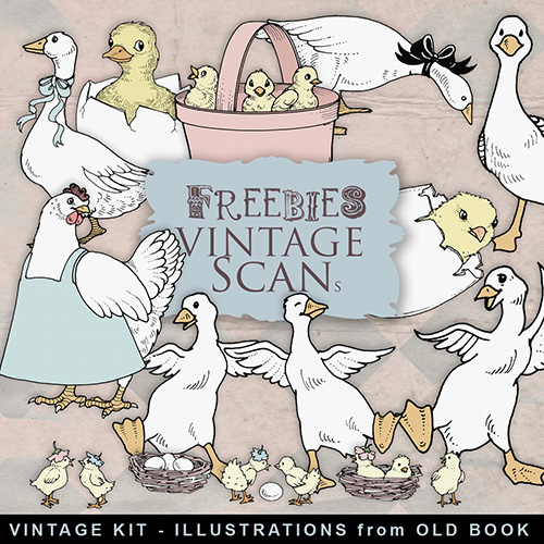 Scrap-kit - Vintage Illustrations From Old Book - Geese and Chickens
