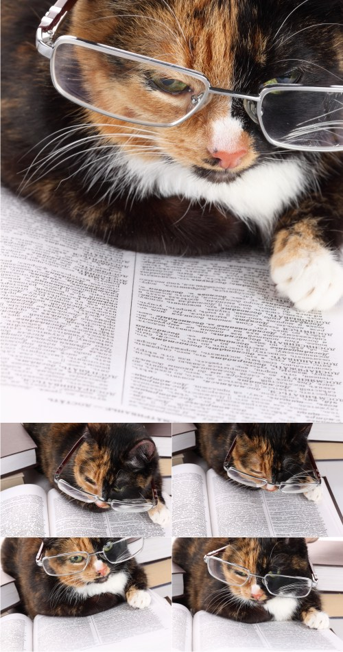 Stock Photos - Reading Cat