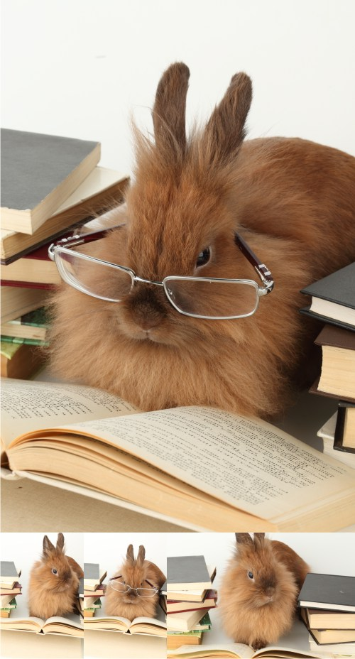 Stock Photos - Reading rabbit