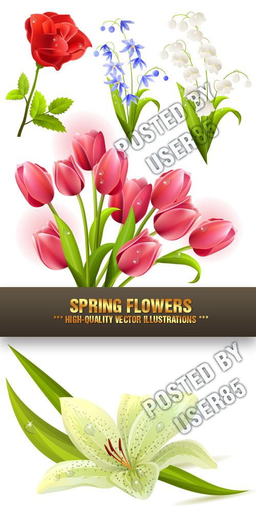 Stock Vector - Spring Flowers