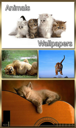 wallpapers animals. Wallpapers - Animals 151 jpg