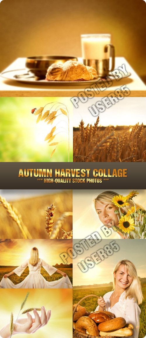 Stock Photo - Autumn Harvest Collage