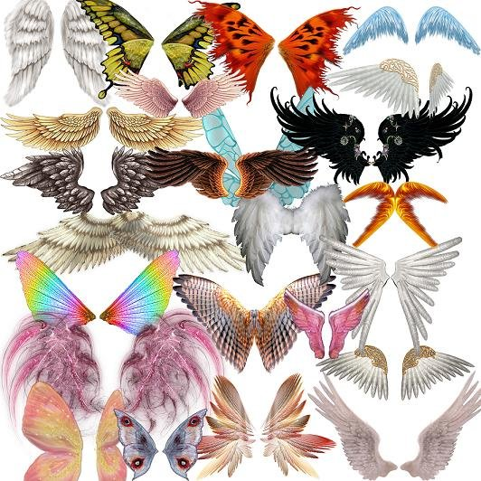 Collection Wings PSD