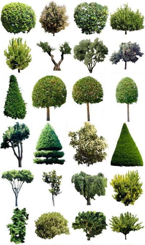 3D DOSCH Viz-Images Trees